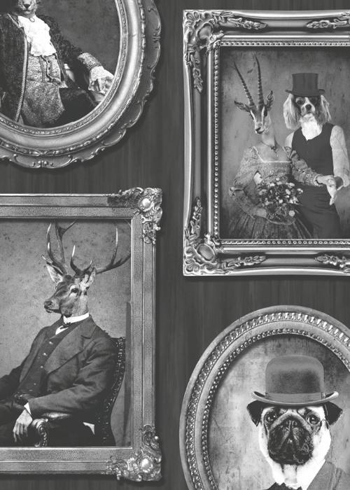 Animals in Frames
