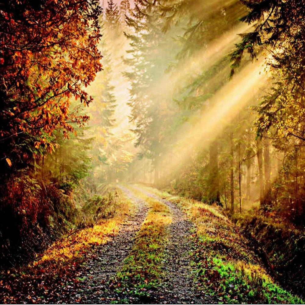 1 wall forest path sun beam giant wallpaper mural w8p for Poster giganti