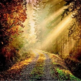 1 Wall Forest Path Sun Beam Giant Wallpaper Mural