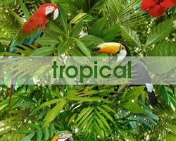 Dropdown Tropical Wallpaper Promo Image