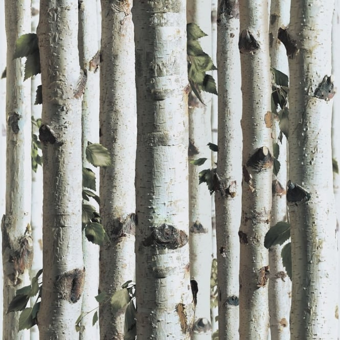 muriva bluff forest wood silver birch tree bark wallpaper