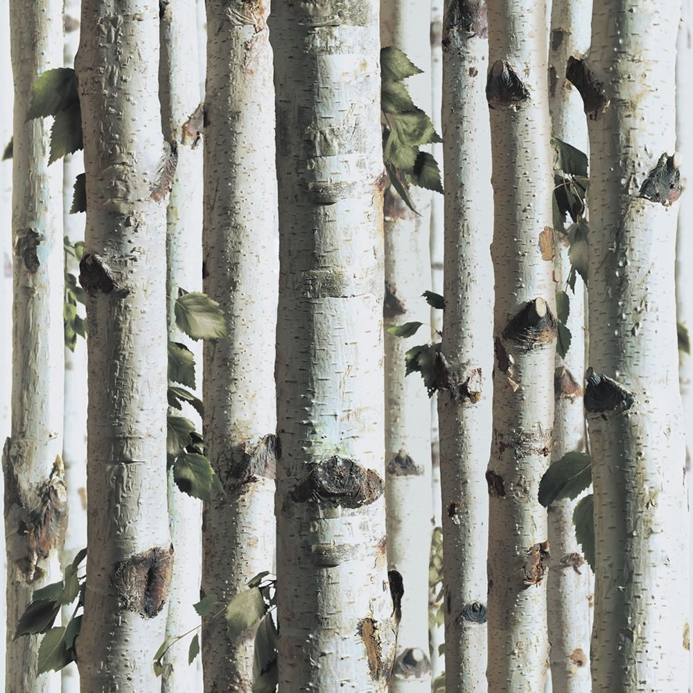 Muriva bluff forest wood silver birch tree bark wallpaper for Tree wallpaper for walls