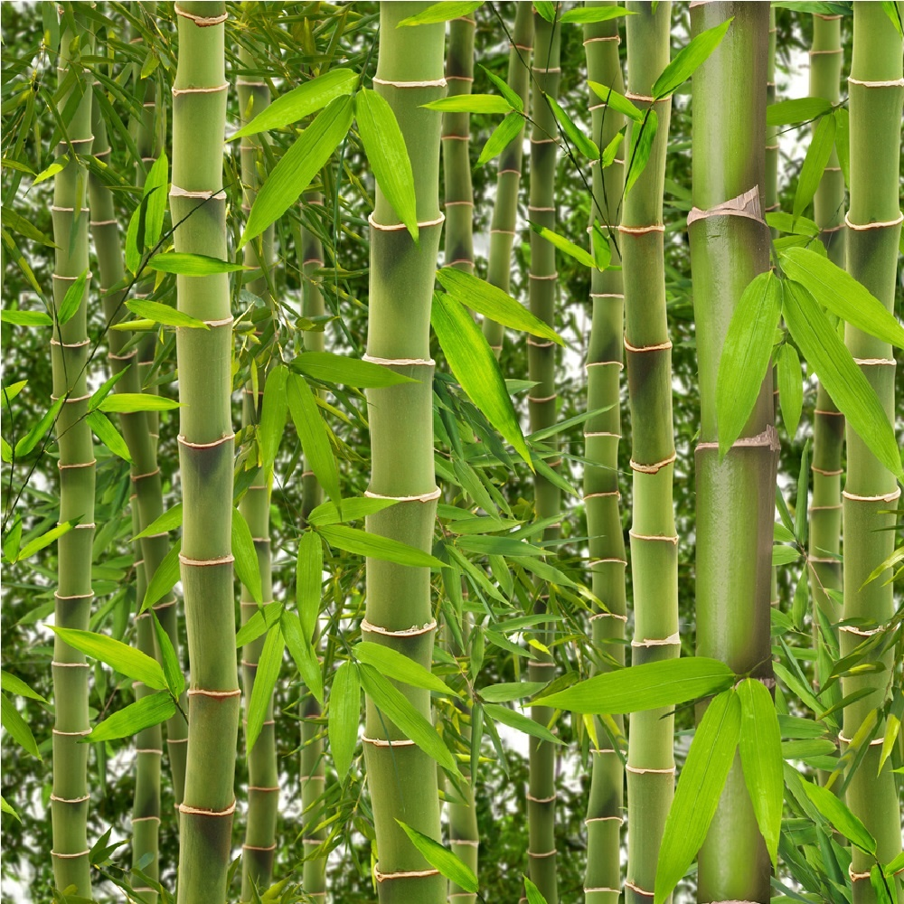 Muriva rainforest green bamboo trees leaves vinyl for Papel de pared lavable